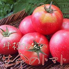 【ふるさと納税】《事前予約制》《期間限定・数量限定》トマト飛騨のトマト名人坪根さんが作るGABAたっぷり生命のトマト大玉2キロ[Q061]