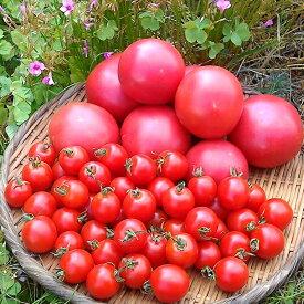 【ふるさと納税】《期間限定》トマトとミニトマトのセット 有機JAS認定 合計1kg[A0091]