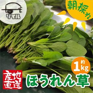 【ふるさと納税】飛騨ほうれん草 約1kg 200g×5袋セット 野菜 葉物野菜 ホウレンソウ 産地直送