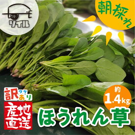 【ふるさと納税】《訳あり》飛騨ほうれん草 約1.4kg 200g×7袋セット 野菜 葉物野菜 ホウレンソウ 産地直送