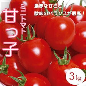 【ふるさと納税】産地直送!飛騨下呂のミニトマト 甘っ子 3kg