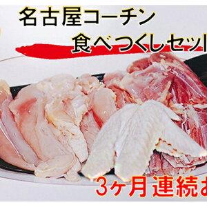 【ふるさと納税】【3ヶ月連続お届け】名古屋コーチン もも・むね・ささみ合計2.4kg +手羽先6本 【定期便・お肉・鶏肉・ムネ・名古屋コーチン・手羽先・もも・むね・ささみ・3カ月・3回】