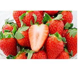 【ふるさと納税】キラっと輝くいちご『きらぴ香』2箱4パック 【果物類・いちご・苺・イチゴ】 お届け:2021年2月上旬〜4月中旬