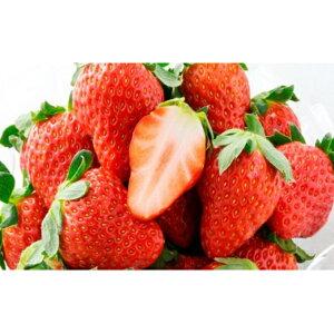 【ふるさと納税】ほっぺたが落ちる『紅ほっぺ』3箱12パック 【果物類・いちご・苺・イチゴ】 お届け:2020年2月上旬〜4月中旬