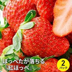 【ふるさと納税】ほっぺたが落ちる『紅ほっぺ』 2パック【2021年3月上旬以降お届け】 【果物類・イチゴ】 お届け:2021年3月上旬〜4月上旬