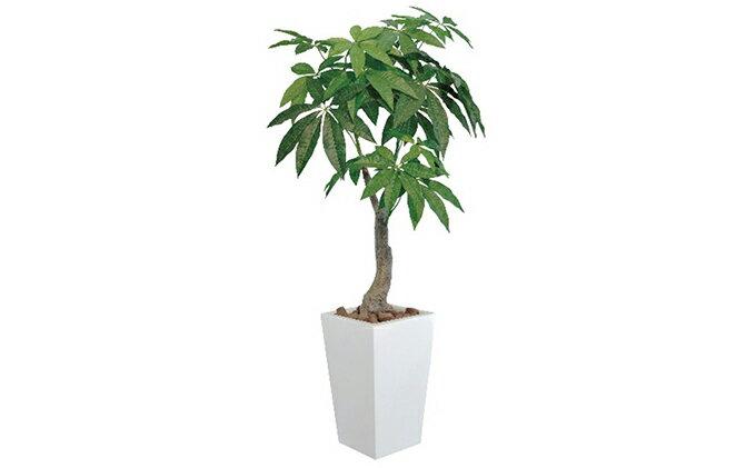 【ふるさと納税】光の楽園 ロイヤルパキラ1.35m 【観葉植物】