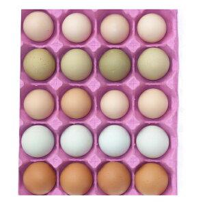 【ふるさと納税】滋養豊富 烏骨鶏の卵入り 鶏卵5種 詰め合わせ 【卵】
