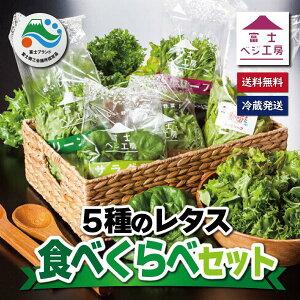 【ふるさと納税】1517富士山の伏流水で農薬を使わず育てた新鮮レタス5種類×2株セット