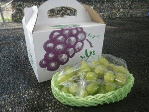 【ふるさと納税】磐田市産「シャインマスカット」(8月発送)