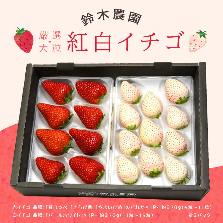 【ふるさと納税】掛川産「厳選大粒 赤と白イチゴ」 270g×2パック 鈴木農園