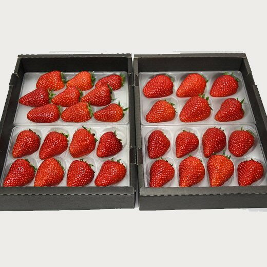 【ふるさと納税】厳選イチゴ 紅ほっぺ(静岡県掛川市産) 270g×4パック 鈴木農園