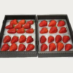 【ふるさと納税】厳選イチゴ紅ほっぺ(静岡県掛川市産)300g×4パック鈴木農園