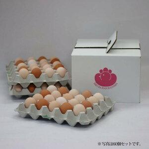 富士山の恵み豊かな環境で、愛情一杯に育てています。「純国産鶏さくらちゃんが産んだ桜色のさくら玉子の五分咲き30個」