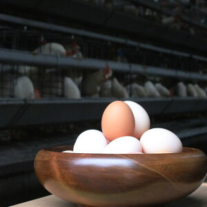 富士山の恵み豊かな環境で、愛情一杯に育てています。「純国産鶏さくらちゃんが産んだ桜色のさくら玉子の五分咲き80個」