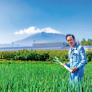 【ふるさと納税】富士山の麓で育った「白ネギ」3kg【野菜】