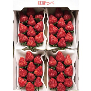 【ふるさと納税】農水大臣賞受賞農園からお届け イチゴ・紅ほっぺ 4パック 【果物類・いちご・苺・イチゴ】 お届け:2020年1月中旬〜3月末まで
