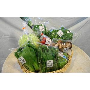 【ふるさと納税】とれたて野菜パック 【野菜・セット・詰合せ】
