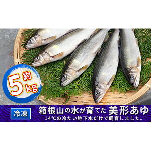 【ふるさと納税】箱根の水が育てた美形あゆ【冷凍 約5kg】 【魚貝類・鮎・アユ】