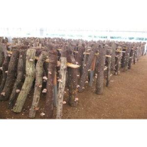 【ふるさと納税】C-12 原木栽培の乾しいたけ・生しいたけ・しいたけ狩りセット