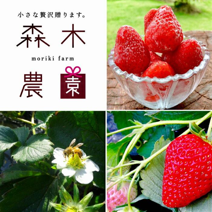 【ふるさと納税】森木農園が作る、濃く甘いちご『紅ほっぺ』冷凍いちごにしてどーんと3kg以上!!