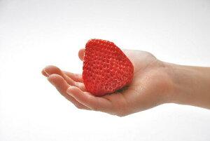 【ふるさと納税】紅白いちご冷凍紅白セット 白いちご「Sweet milk berry 650g」紅いちご「紅ほっぺ 650g」