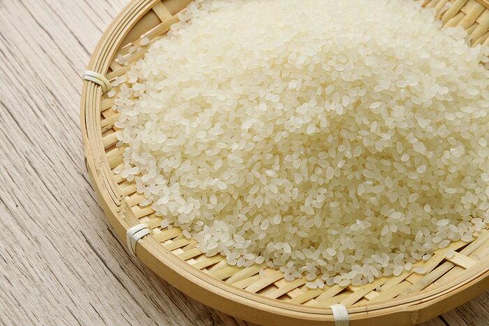 【ふるさと納税】さくら農園おいしいお米セット(コシヒカリ10キロ、するがもち1キロ)