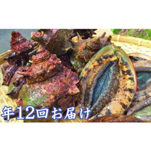 【ふるさと納税】毎月お届け 海からのおくり物(年12回) 【海老・伊勢エビ・魚介類・あわび・アワビ・鮑・魚貝類・干物】