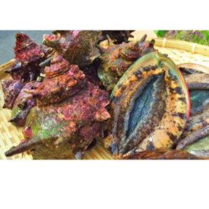 【ふるさと納税】活 アワビ 4月〜9月中旬出荷予定 【魚介類・あわび・アワビ・鮑】 お届け:2021年4月〜2021年9月中旬
