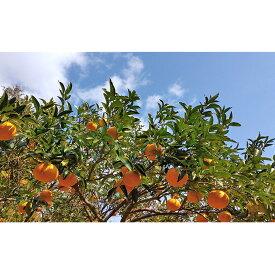 【ふるさと納税】甘夏みかん 約10kg【農薬不使用】 【果物類・柑橘類・フルーツ】 お届け:2021年3月下旬〜6月下旬