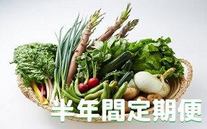 【ふるさと納税】湯の花 旬の野菜セット半年間の定期便