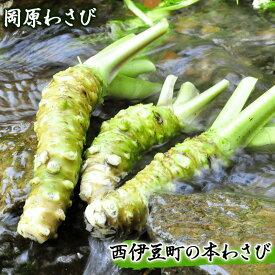 【ふるさと納税】西伊豆町の本わさび(岡原わさび)