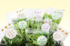 【ふるさと納税】柿田川野菜3種のレタス詰合せ