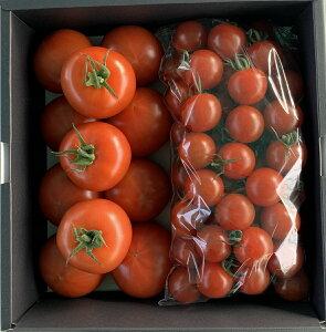 【ふるさと納税】【期間限定】すみ農園 「ぜいたくトマト」・「ミニトマト 甘っこ」詰め合わせ 約1.5kg