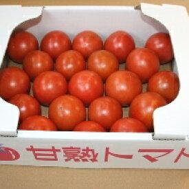 【ふるさと納税】【2021年以降発送】とっても甘〜い!川助農園のフルーツトマト1.5kg以上(最大糖度15.3度!!)