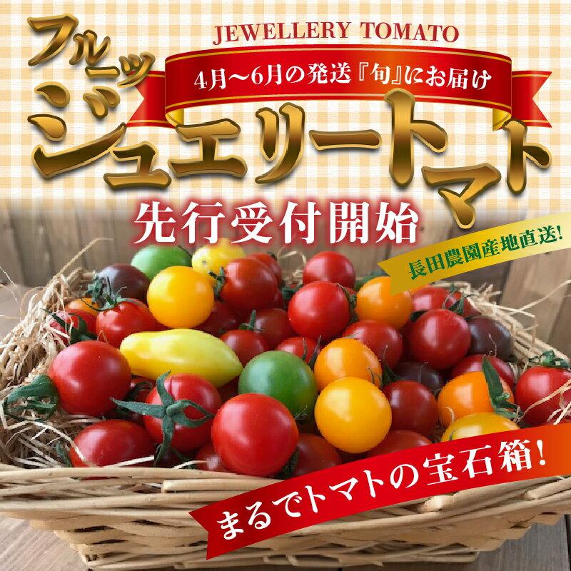 【ふるさと納税】4月〜6月の発送 『旬』にお届け まるでトマトの宝石箱!ジュエリートマト≪先行受付≫