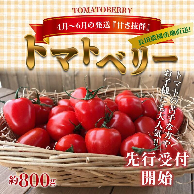 【ふるさと納税】4月〜6月の発送 甘さ抜群!!トマト嫌いも食べられるトマトベリー約800g≪先行受付≫