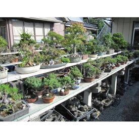 【ふるさと納税】☆小品盆栽【15kg】