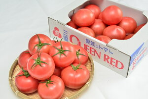 【ふるさと納税】水耕栽培トマト(大玉)