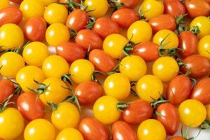【ふるさと納税】水耕栽培トマト詰め合わせ