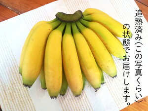 【ふるさと納税】超希少!国産完熟バナナ(美浜町産)モッチリ系の品種をたっぷり3kgすぐ食べられる状態でお届け!