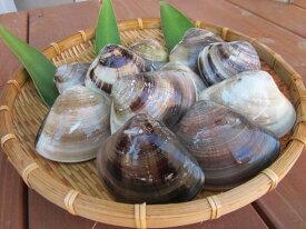 【ふるさと納税】 丸元水産 桑名産蛤(ハマグリ)1.4kg