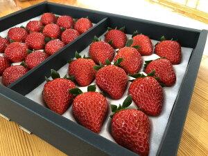 【ふるさと納税】極選 イチゴ 紅ほっぺ