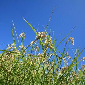 【ふるさと納税】環境こだわり農産物 低農薬100%有機肥料コシヒカリ 玄米 5kg※着日指定はできません。