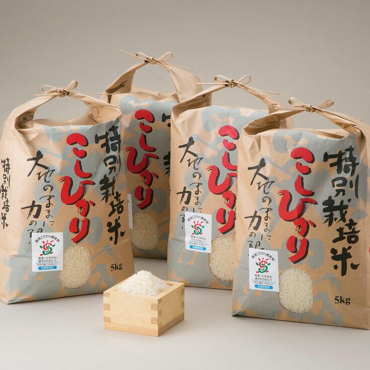 【ふるさと納税】【T-522】よこいファーム 特別栽培米コシヒカリB(平成30年産新米)