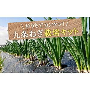 【ふるさと納税】〈こと京都〉自宅で「つくれる」「食べられる」九条ねぎ栽培キット