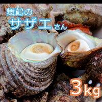 【ふるさと納税】海の街舞鶴のサザエさん3kg活さざえ3キロ