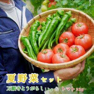 【ふるさと納税】夏野菜セット 万願寺とうがらし1kg トマト2kg 化粧箱入【送料無料】