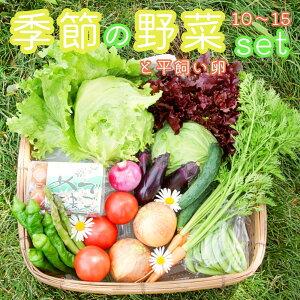 【ふるさと納税】季節の野菜と卵セット 旬野菜10〜15種類と平飼い卵の詰め合わせ 無農薬 やさい たまご セット 減農薬 無化学肥料 有機肥料