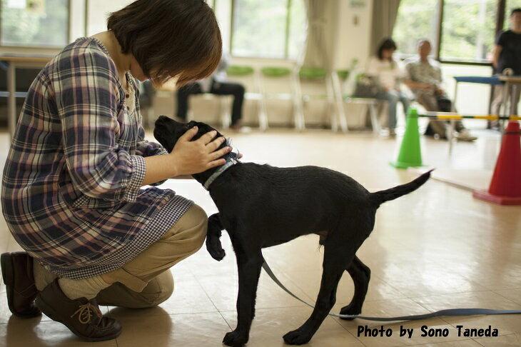 【ふるさと納税】盲導犬訓練支援寄付〜「行きたい場所に、安心していける社会に…」〜(10,000円)
