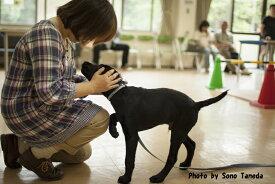 【ふるさと納税】盲導犬訓練支援寄付〜「行きたい場所に、安心していける社会に…」〜(50,000円)